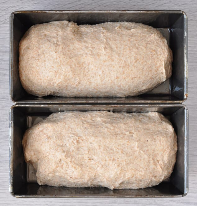 2 loaf tins filled with unbaked bread dough